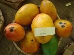 Mangos der Sorte Glenn (Foto: Asit K. Ghosh, cc-by-sa 3.0)