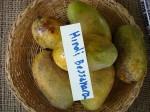 Mangos der Sorte Allampur Baneshan (Foto: Asit K. Ghosh, cc-by-sa 3.0)