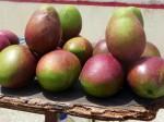 Mangos der Sorte Julie (Foto: Aaron & Katie Kaio, http://bit.ly/ZqQaYb)