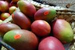 Mangos der Sorte Moro (Foto: Markus Nolf / Vom Essen Besessen)