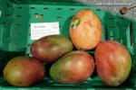 Mangos der Sorte Osteen (Foto: Markus Nolf / Vom Essen Besessen)
