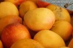 Mangos der Sorte Peach (Foto: Markus Nolf / Vom Essen Besessen)