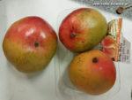 Mangos der Sorte Shelly (Foto: Hermann Meier)