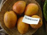 Mangos der Sorte Turpentine (Foto: Asit K Ghosh, cc-by-sa 3.0)
