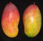 Mangos der Sorte Valencia Pride (Foto: Asit K. Ghosh, cc-by-sa 3.0)