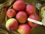 Mangos der Sorte Van Dyke (Foto: Asit K. Ghosh, cc-by-sa 3.0)