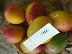 Mangos der Sorte Zill (Foto: Asit K. Ghosh, cc-by-sa 3.0)