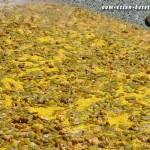 Riesenpaella (Paella valenciana) (Foto: Markus Nolf / Vom Essen Besessen)